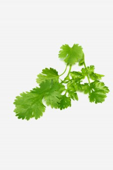 Balsamic Fresh Coriander