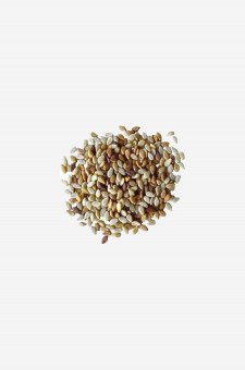 Roasted Seasme Seeds