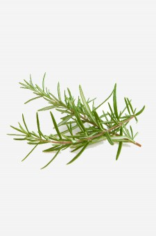 Rosemary Infused